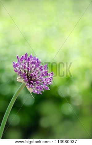 macro of single purple flower