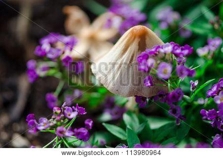 macro image of small mushrooms