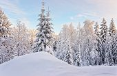 Tree in a hill above the snow covered forest in Ruka village in Finland in the Arctic pole circle in winter poster