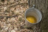 Pail used to collect sap of maple trees to produce maple syrup in Quebec. poster