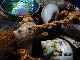 Shells and rope