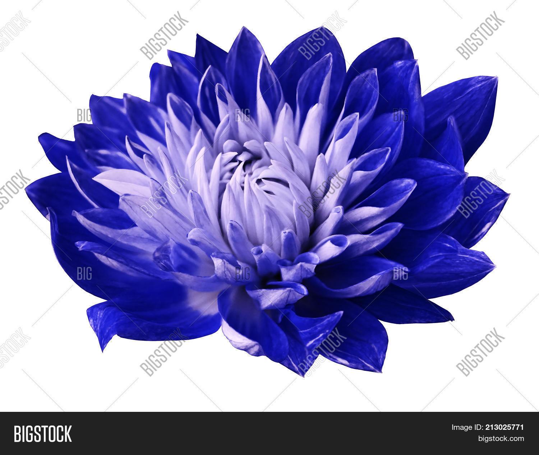 Flower Blue White Image Photo Free Trial Bigstock