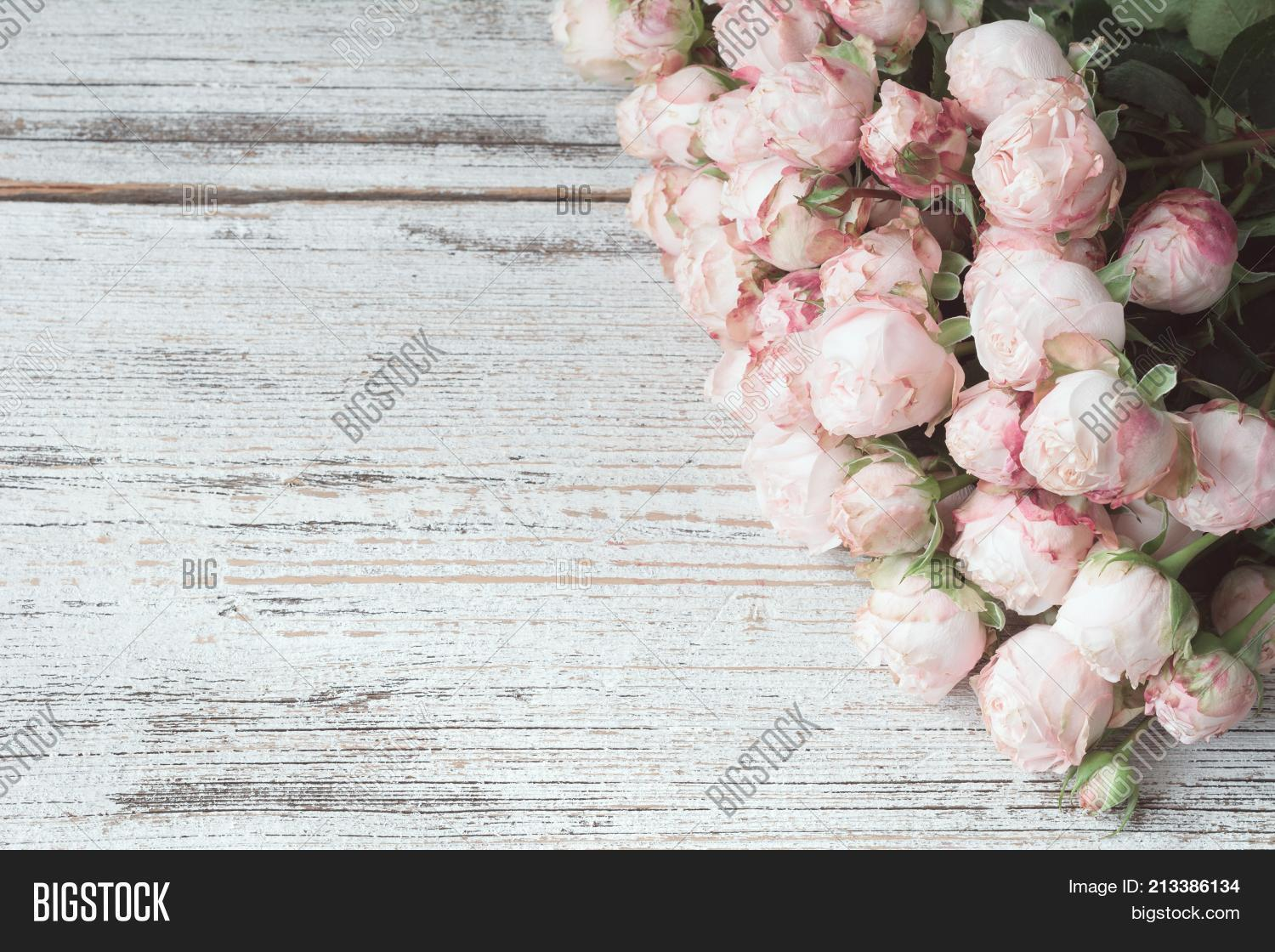 pink roses on vintage image photo free trial bigstock pink roses on vintage image photo
