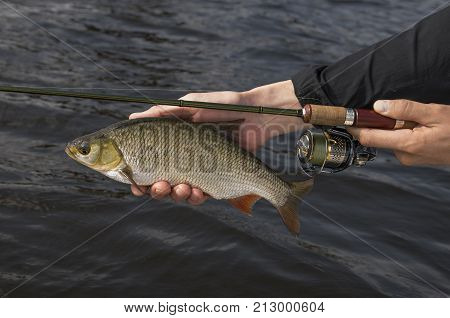 Ide fish in hand of fisherman with rod