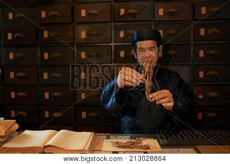 Traditional Asian medicine practitioner examining lucidum before pack it for selling