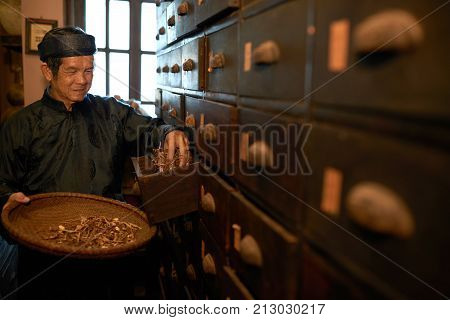 Apothecary worker taking dry herbs out of drawer