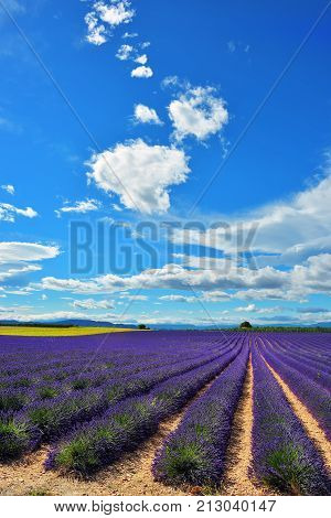 Provence, France, Lavender Field