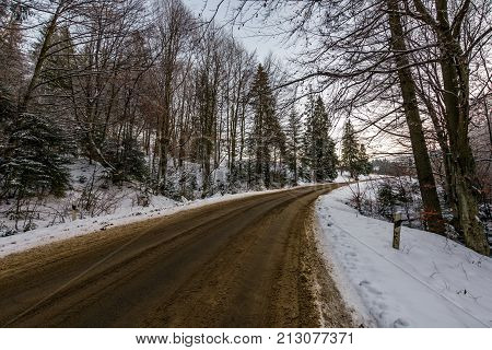 Asphalt Road Through Winter Forest