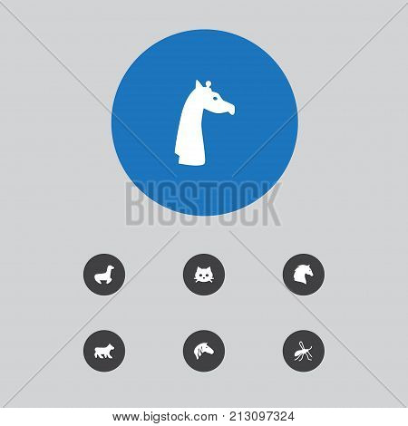 Collection Of Polar, Gnat, Steed And Other Elements.  Set Of 7 Zoology Icons Set.