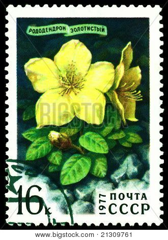 Vintage  Postage Stamp.  Rhododendron  Golden.