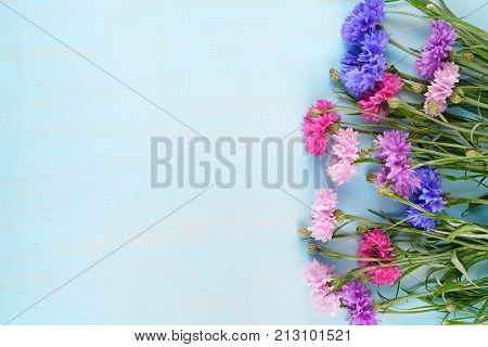 Cornflowers on blue background with copy space