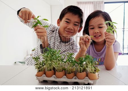 Mixed Asian children holding seedling in eggshells eco gardening montessori education reuse concept
