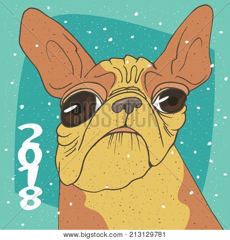 Ridiculous Portrait Of Breed French Bulldog