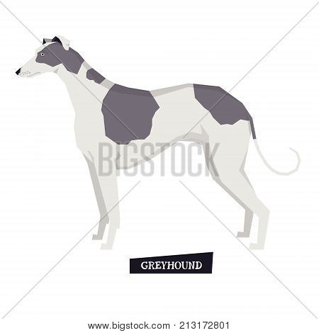 Dog collection Greyhound Geometric style set Isolated object
