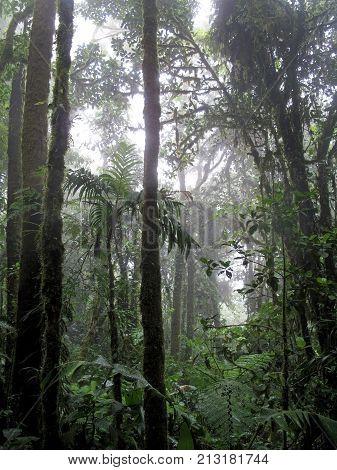 Cloud forest of Reserva Biologica Bosque Nuboso Monteverde, Costa Rica, Central America