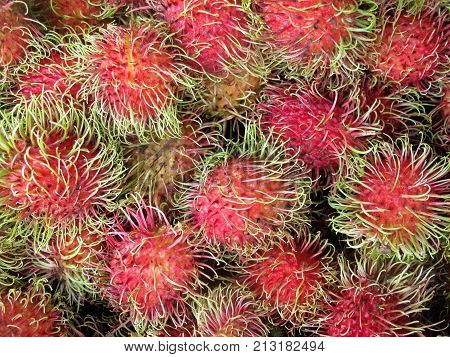 Rambutan, Nephelium Lappaceum, the lychee like fruit with long hooked spines, Costa Rica, Central America