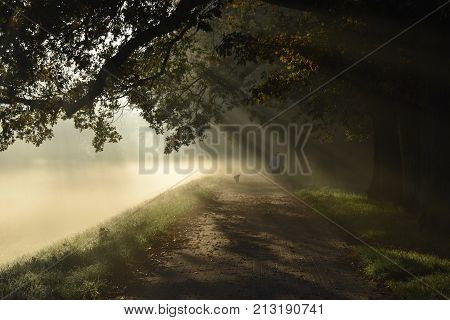 Mystery road misty landscape morning autumn park with sun rays