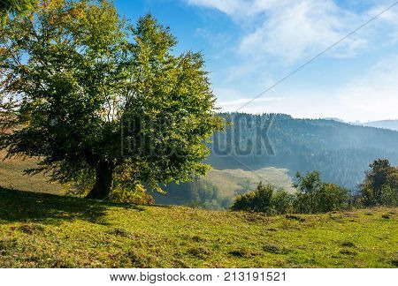 Tree On A Slope In Hilly Countryside