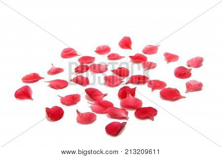 small red petals isolated on white background
