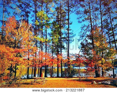 A beautiful park view of tall trees with picnic tables and a lake in the background.
