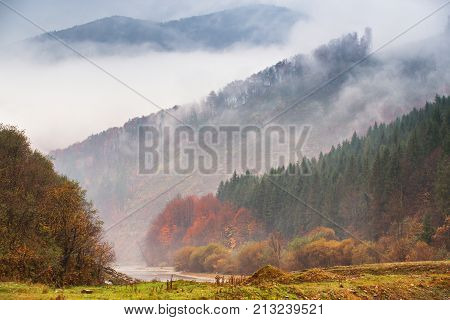 Autumn Rain And Fog In The Mountains. Colorful Autumn Forest Background