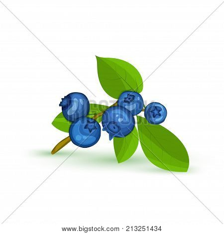 Blueberry branch and green leaves. Vector card illustration. Blue bilberry fresh and juicy for design of food packaging juice breakfast cosmetics tea detox diet