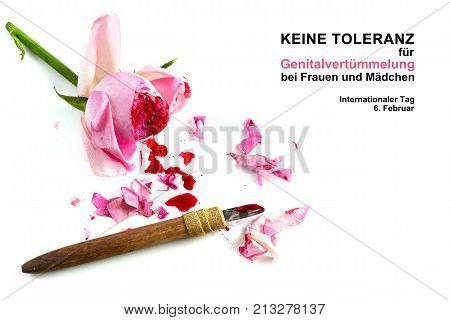 cut rose blossom blood and knife isolated on a white background with german text Keine Genitalverstümmelung bei Frauen und Mädchen that means zero tolerance for FGM international day date 6 february