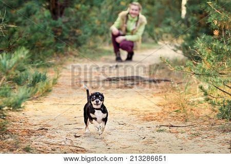 Game Of Run A Small Chihuahua.baby Girl Outdoors With A Small Dog.