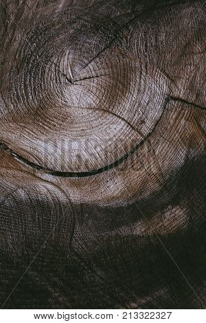 Cut tree trunk background and texture. Wood texture of cut tree trunk. Closeup view of old wood texture. Abstract texture and background for designers. Wooden background. Natural pattern.