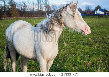 Rural white. Idyllic peaceful world of simple living. Horse groomed and unkempt.