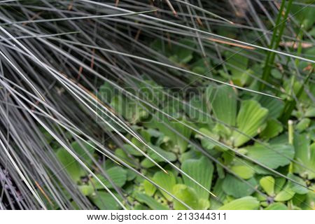 duckweed abstract view trough palm plant design structure