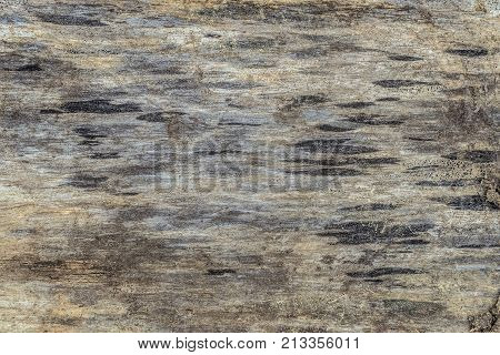 Natural texture of a cut of darkened old raw wood
