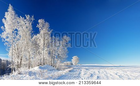 panorama beautiful rural winter landscape a with blue sky a field and forest. wintry day. panoramic view