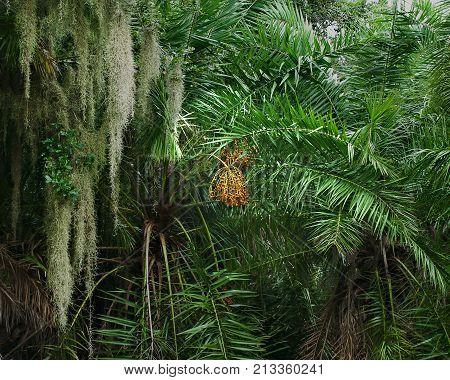 Lush fauna in sub tropical Florida landscape