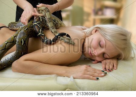 Beautician putting snakes on female body. Beautiful young woman receiving recreational massage with a lot of snakes. New popular method of stress treatment.