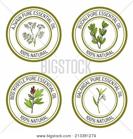 Set of essential oil labels. Hand drawn vector illustration