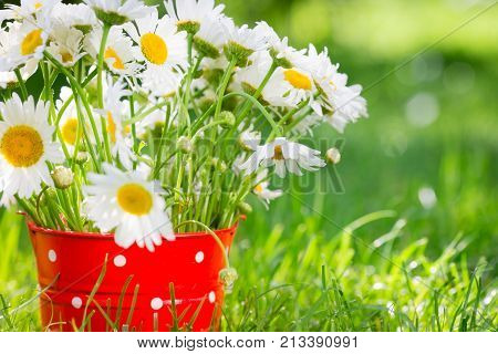 Beautiful bunch of spring flowers in red bucket. Shallow depth of field