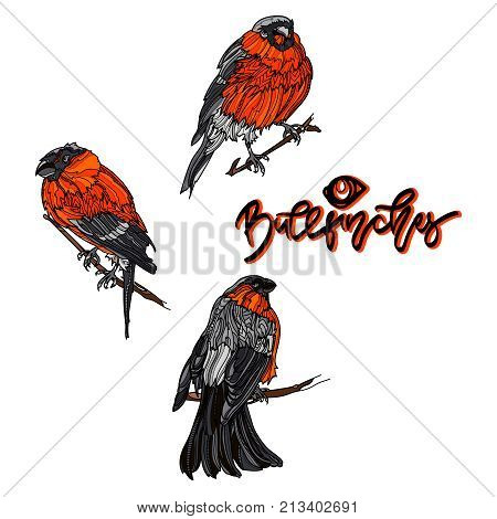 Bullfinches on branches. Hand drawn lettering -