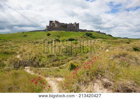 Bamburgh Castle Northumberland north east England UK with red flowers