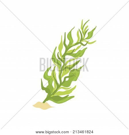 Green seaweed in cartoon flat style. Plant on sandy ocean bottom. Underwater world. Aquatic environment concept. Coral icon. Vector illustration isolated on white background. Aquarium design element.