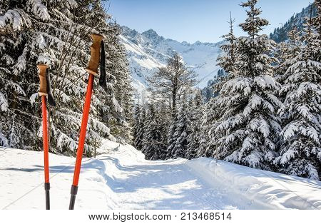Pair of red ski sticks in snow. Sporting activity in mountains winter landscape and forest. Allgau Alps, Bavaria in Germany.