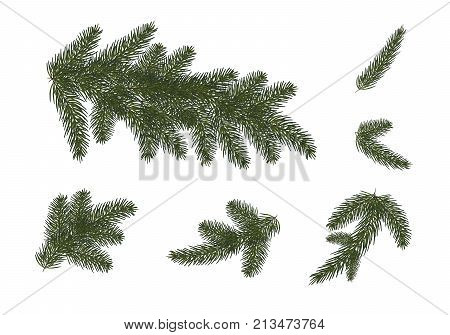 set: Xmas tree branches. Christmas and Happy New Year décor . Isolated without a shadow. Fir tree branches.