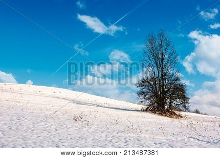 Lonely Tree On A Snowy Hillside