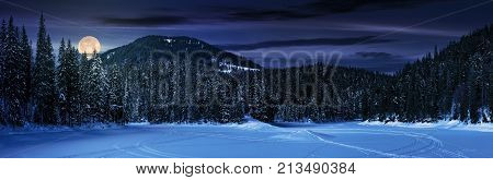 Snowy Meadow In Winter Spruce Forest At Night