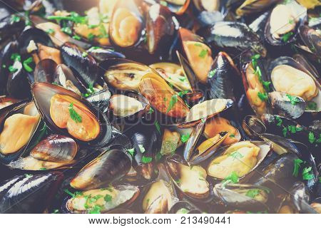 Mussels, molluscs, seaweed, sea plants, ice on old vintage rustic metal background. Top view, copy space. Toned sunny effect