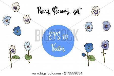 Vector set of Pansy Flowers and Leaves isolated on white background.