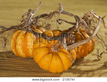 Golden Pumpkin Trio