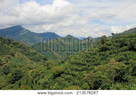 Landscape of coffee and banana plants in the coffee growing region near El Jardin, Antioquia, Colombia, South America