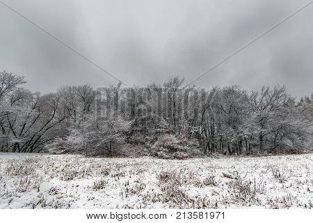 Glade and trees in the park covered with snow in late autumn