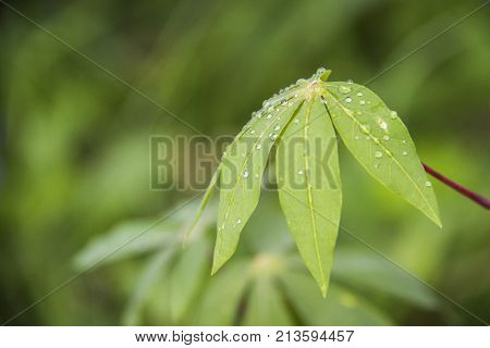 Green plants with teardrops. Green and minty leaves.